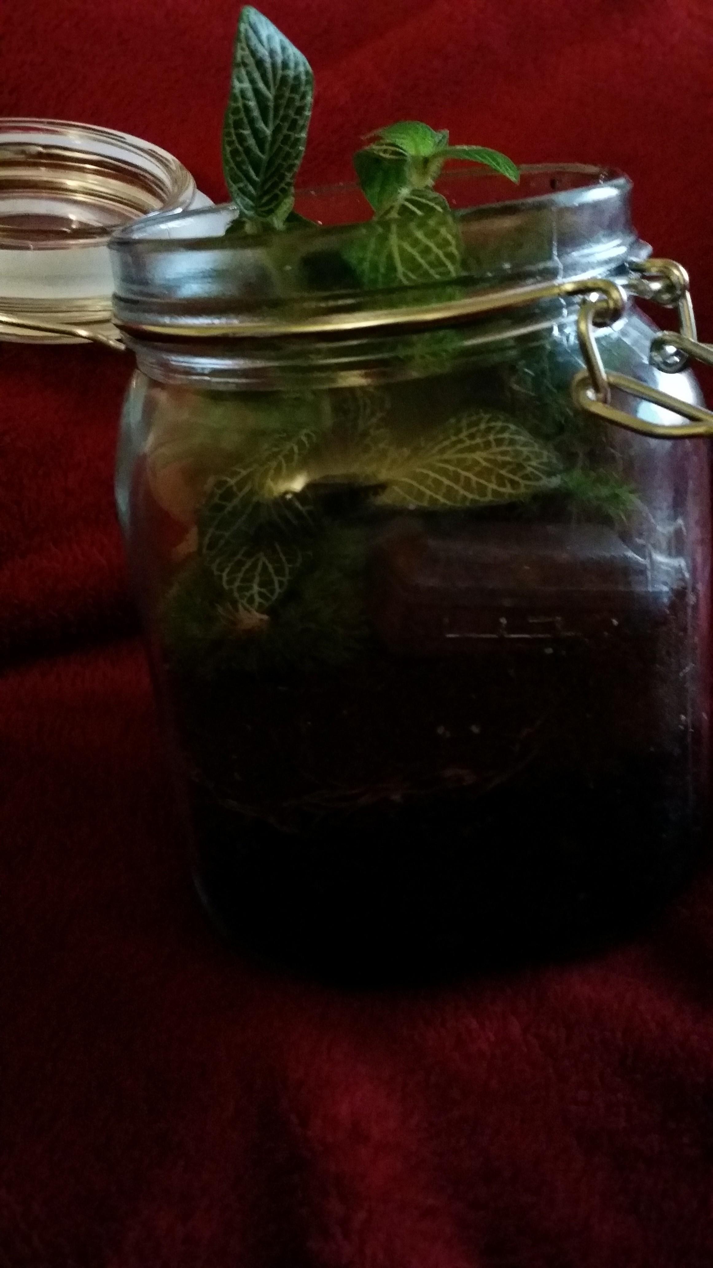 Brettschaffner Com Empty Jar Dirt Plant Hipster Terrarium